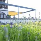 Frühling in Fidaz Flims Falera