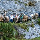 Alpabzug Flimserstein